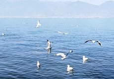 【花样旅途】昆明、大理、丽江泸沽湖双飞(双高)8日游